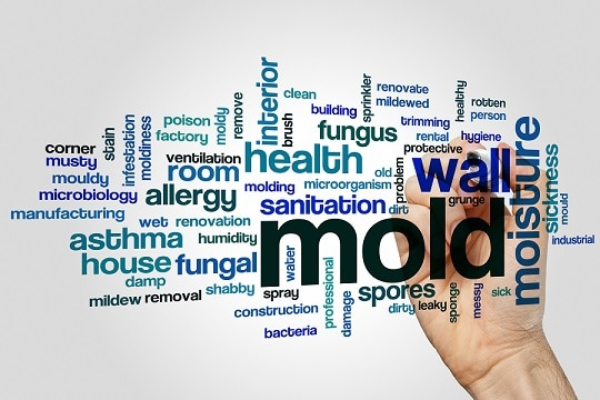 Mold word cloud concept on grey background